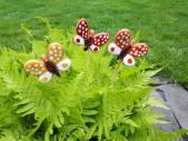 motýlci2
